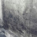 Наличие плесени на стенах