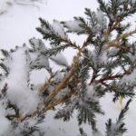 Ландшафтный дизайн участка в зимний период