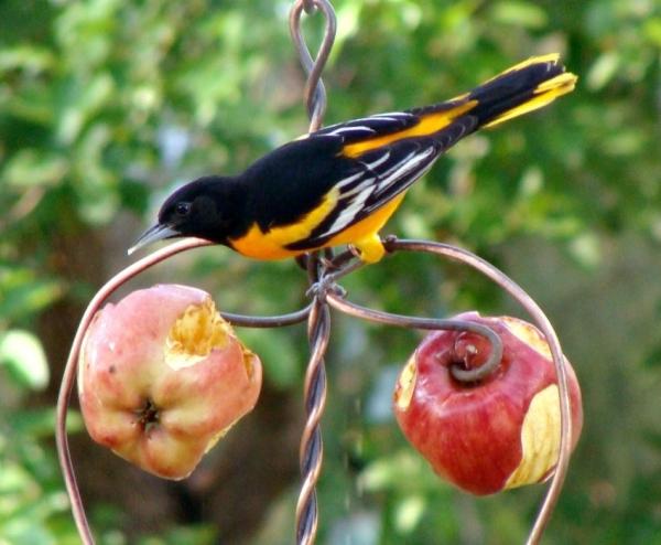 Самодельные кормушки для птиц своими руками фото 927