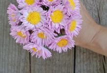 Комнатный цветок с гроздями фото