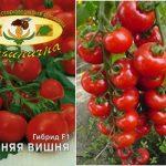 Томат Зимняя вишня: характеристика и описание сорта, урожайность с фото