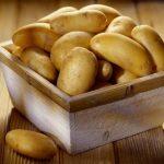 Как хранить картофель в квартире: четыре способа хранения картошки