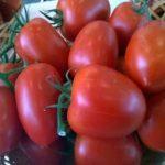 Томат Императрица: характеристика и описание сорта, урожайность отзывы фото