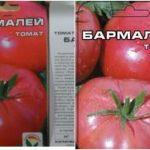 Томат Бармалей: описание и характеристика сорта, выращивание и уход с фото