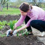 Благоприятные дни для посадки рассады в грунт в мае 2018. Посадочный календарь садовода и огородника