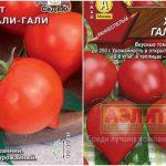 Томат Хали Гали, характеристика и описание сорта, урожайность с фото