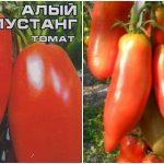 Томат Алый мустанг: характеристика и описание сорта, урожайность отзывы фото