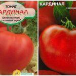 Томат Кардинал: характеристика и описание сорта, урожайность с фото