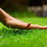 Стрижка газона: 7 важных правил | Строительный блог Вити Петрова