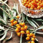 Облепиха: полезные свойства и противопоказания, рецепты