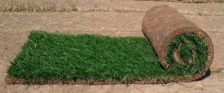 Рулонный газон от производителя купить в Москве