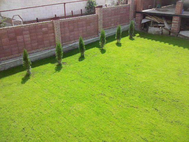 Стоит ли использовать гидропосев газона