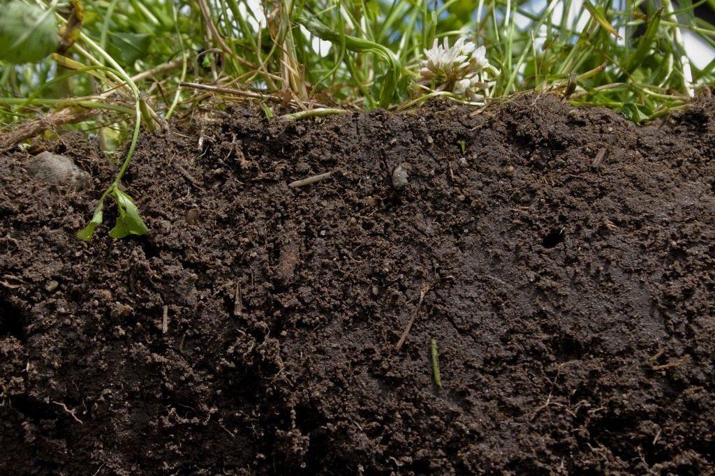 Основные виды почвогрунта