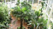 Популярные стили оформления зимнего сада