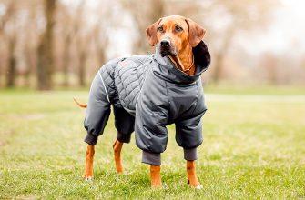 Как выбрать одежду для собак